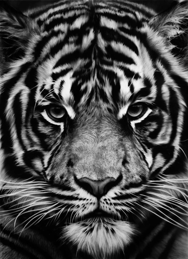 Robert Longo | Tiger | 2012 | Image of Artists' work.